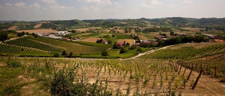 Gavi White Wine